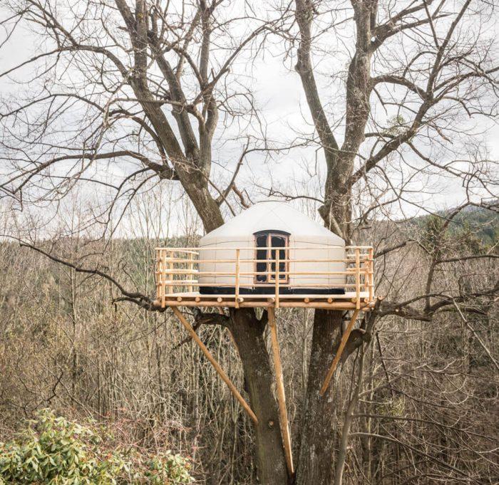 Tree Yurt 1 Treehouses